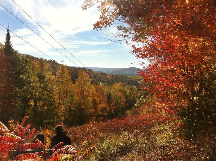 automne_parc_doncaster1