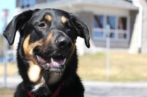 Portraits de chien
