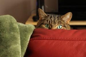 Portrait de chats