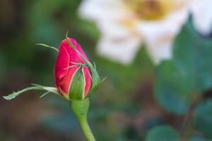 Fleurs – Jardin botanique de Quito