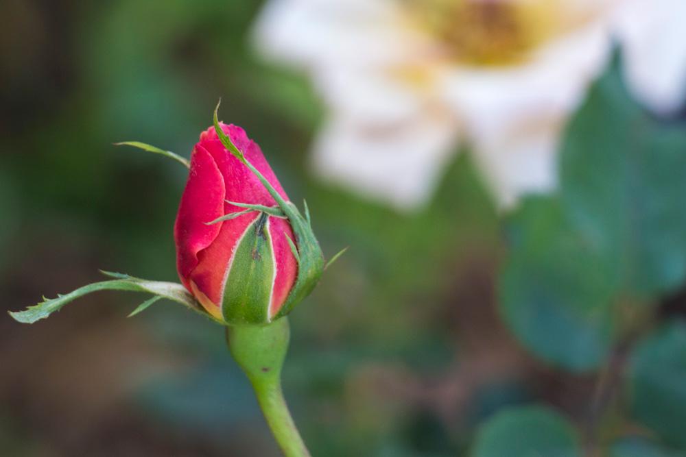 fleur9