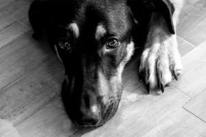 Portrait de chien 2