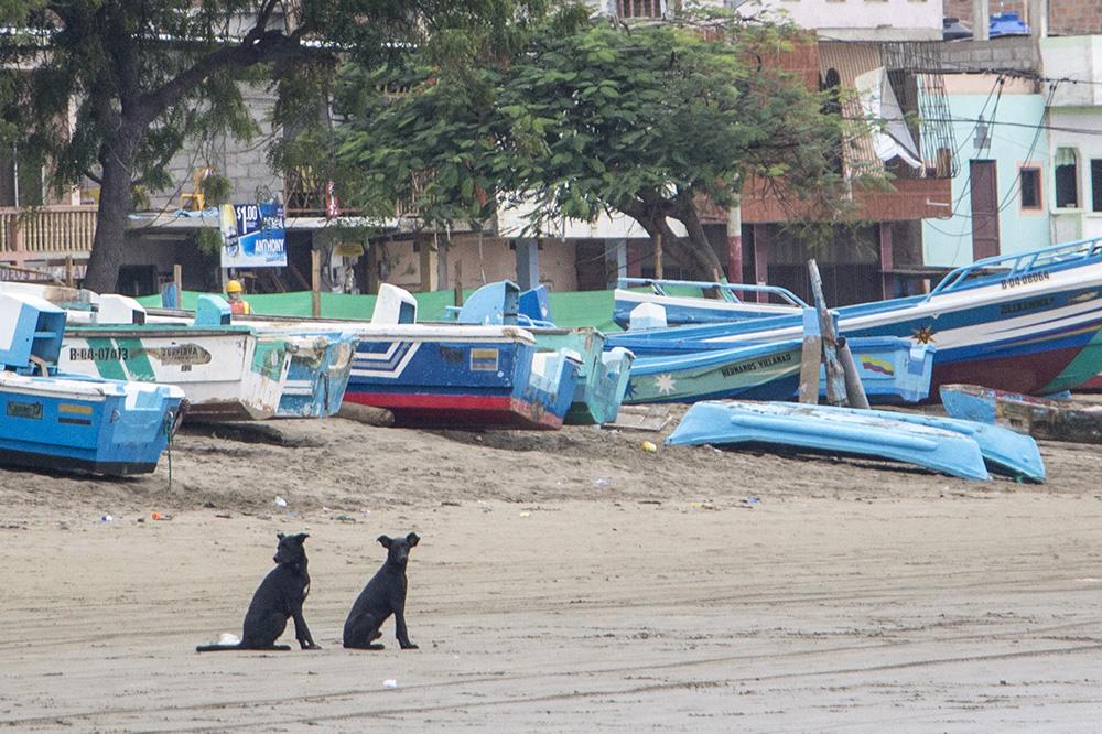 chiens_plage