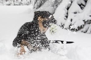 Photos d'hiver : Avant, pendant et après une tempête